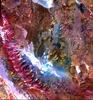 ASTER Satellite Image