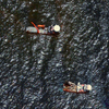 WorldView-2 Satellite Image of Gulf of Mexico Oil Slick